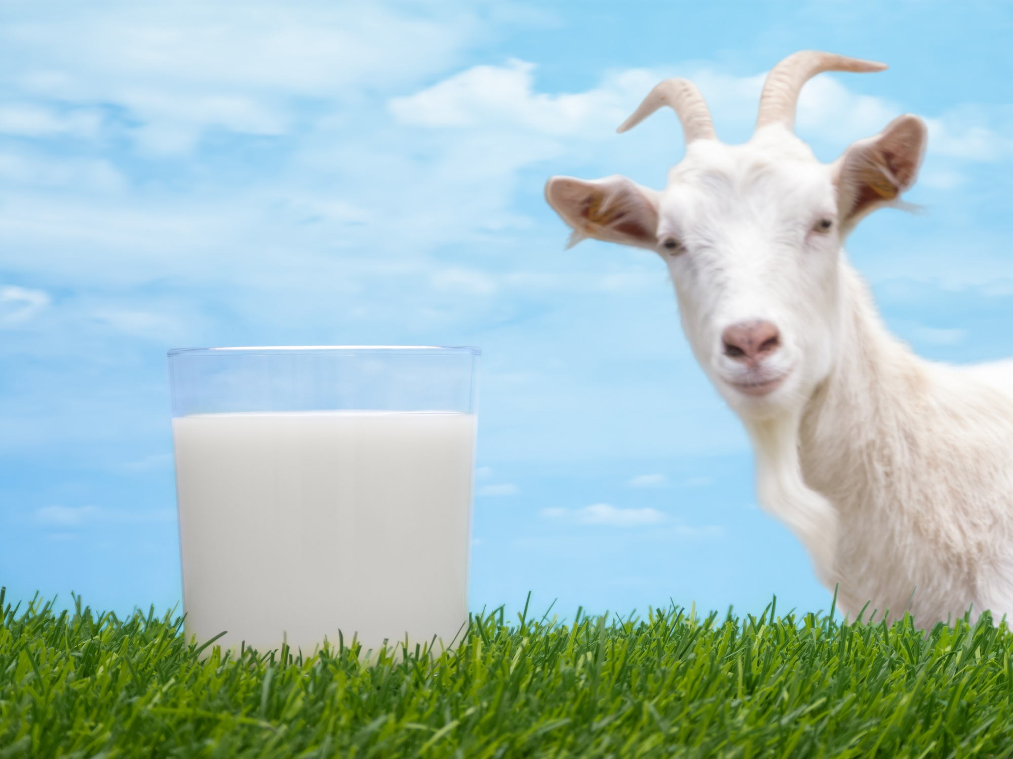 goats-milk-picture